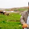 Fiyat Uygun Olunca Esnafın Tercihi Suriyeli