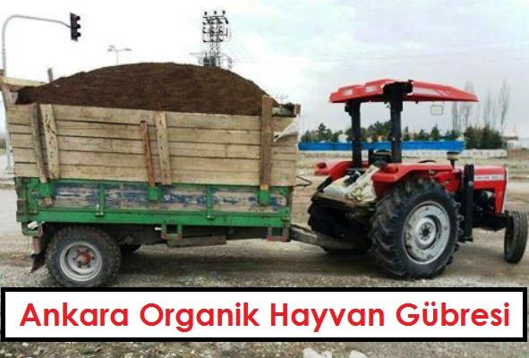 Ankara Organik Hayvan Gubresi