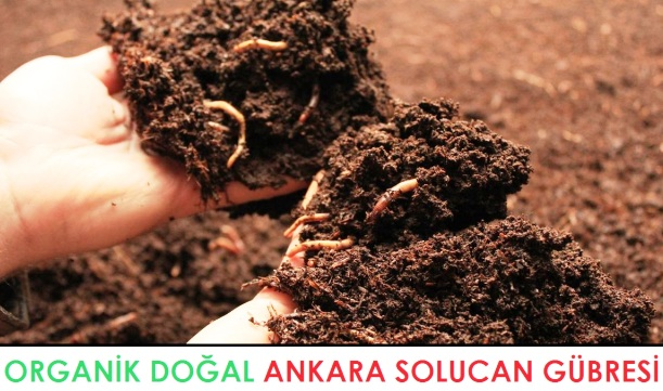 ankara dogal organik solucan gubresi