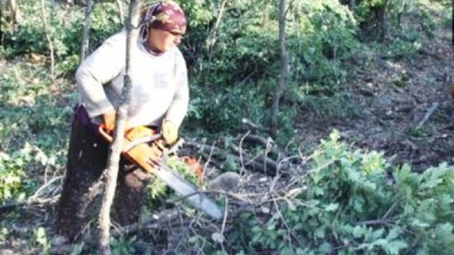 İşçilerin Ormanda Zorlu Yaşamı