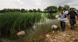 Çubuk'ta Göletlere Balık Yavrusu Bırakıldı