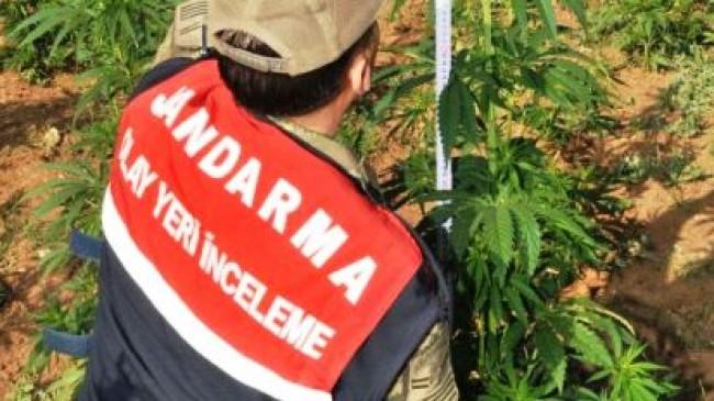 Ankara İlçelerine Kenevir Operasyonu: 12 Gözaltı