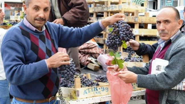 Ankara Çubuk'ta Üzüm Yetiştiriciliğine Başladı