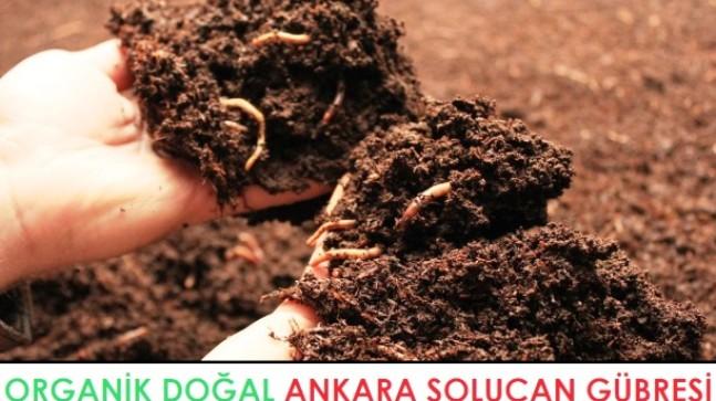 Ankara Solucan Gübresi | Organik Doğal Solucan Gübre