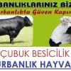 Ankara Kurbanlık | Ankara Besicilik | Kurbanlık Hayvan